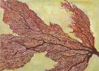 "Gorgonian, gouache, 10 1/4 x 14 1/8"", 2014"