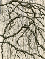 """Weeping Copper Beech, Wave Hill, ink, 11 1/2 x 9"""", 2016"""
